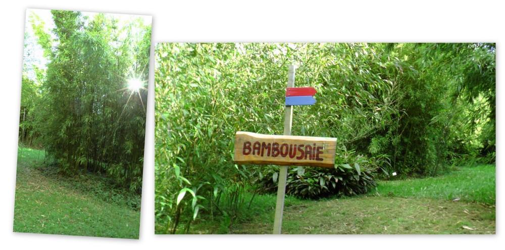 bambousaie1