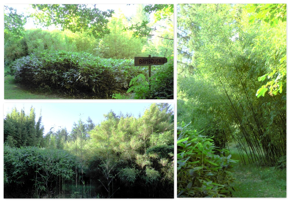 bambouseraie4