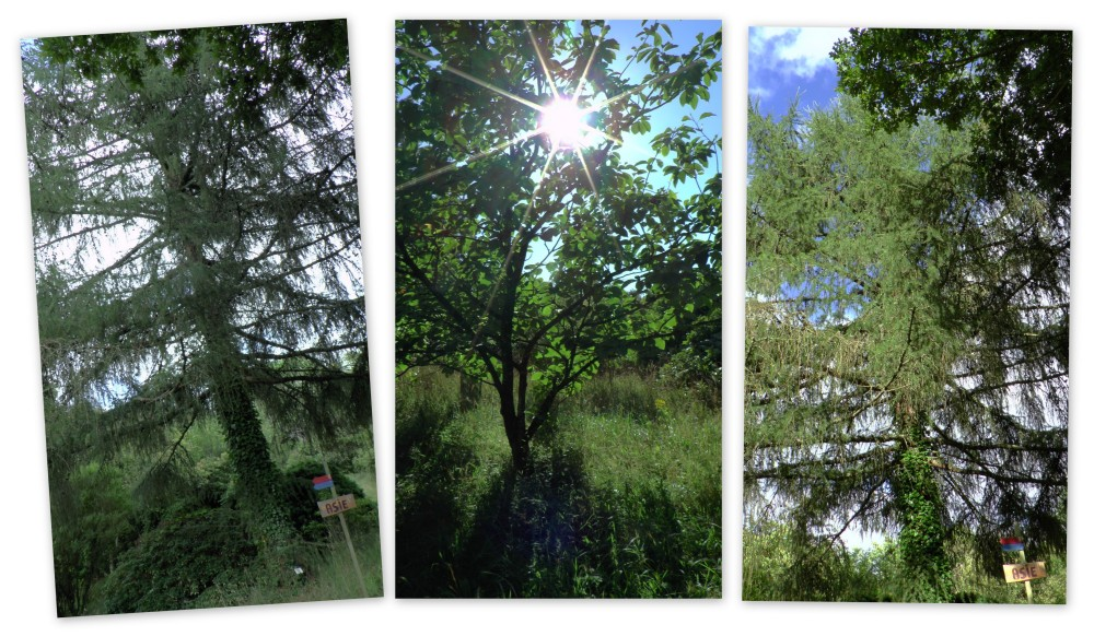 Les arbres du monde asie1